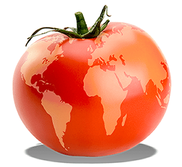 Tomatoes Gecom Export Srl Italy